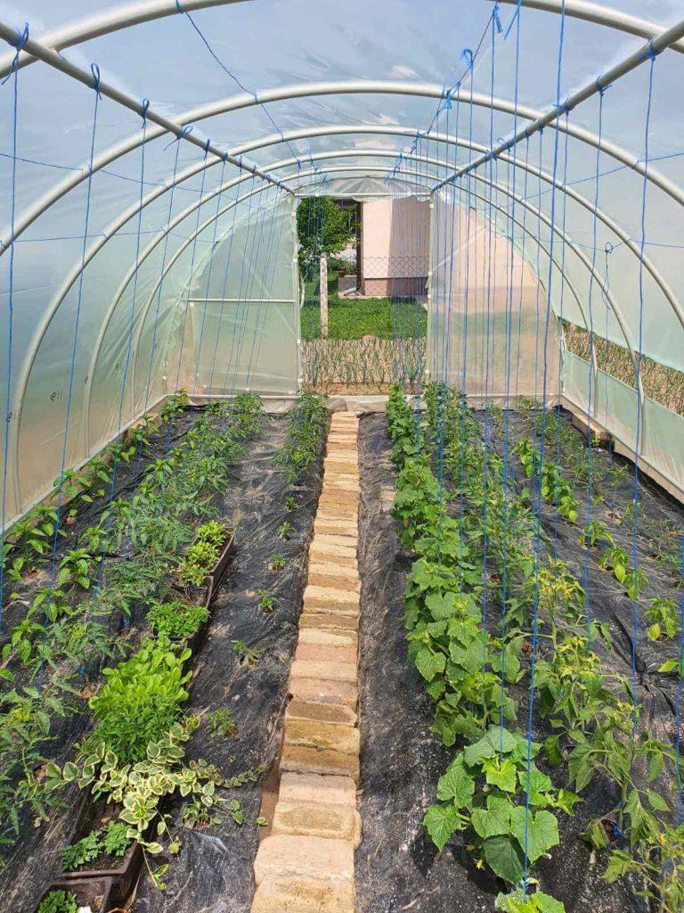 Sezonsko voće i povrće 8, na Zvjezdanoj plantaži
